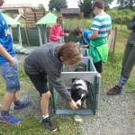 Nous intervenons pour la prévention des morsures auprès des enfants. Nous avons réalisé un stage canin enfant avec 10 jeunes de 10 à 14 ans avec leur chien. Ce stage s'est déroulé du 7 au 11 juillet. Au programme, il y avait : les règles de sécurité, les notions de hiérarchie, l'éducation canine, l'agility, la découverte des obstacles, l'obérythmée, mais nous avons demandé l'intervention d'autres bénévoles et professionnels, l'association des chiens guides d'aveugle, le massage Canin, le toilettage, l'alimentation, les vaccins, l'identification.....