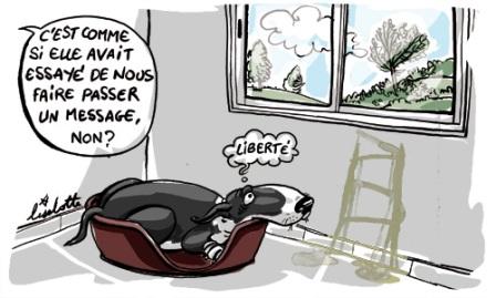 accueil elevage de la h traie de berny eleveur de chiens golden retriever black jack du. Black Bedroom Furniture Sets. Home Design Ideas