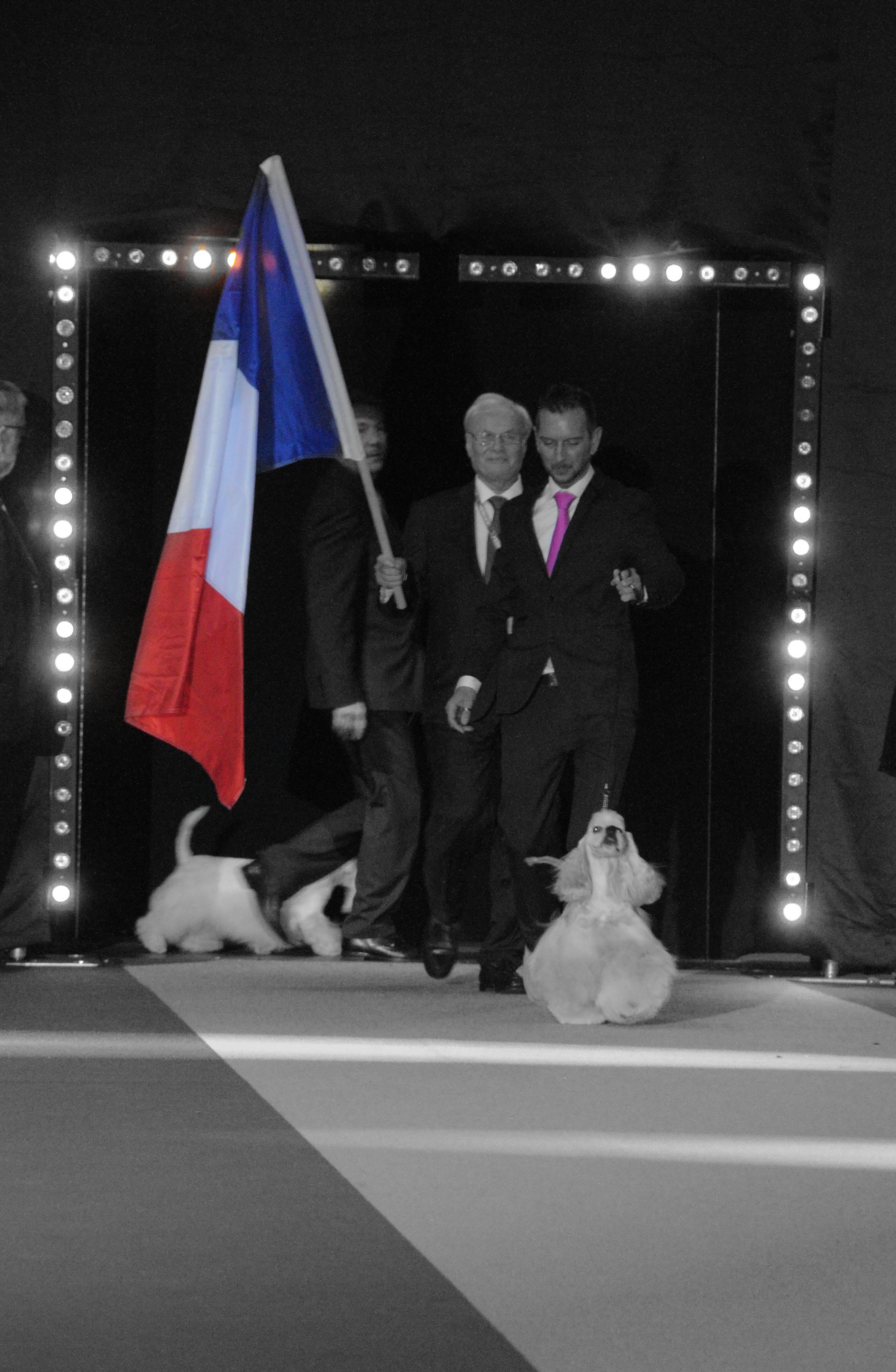 « La France est fière et heureuse que l'American Cocker Spaniel  Multi CH. Very Vigie I don't Know,  présenté par Hugues Schuh et appartenant à Mathilde Leonard-Nolle et Laurent Pichard ait été désigné vainqueur du prestigieux Eukanuba World Challenge 2015 à Amsterdam. J'ai jugé à de nombreuses reprises ce chien d'une qualité exceptionnelle, avec un caractère, une construction et une présentation parfaite. Félicitations pour la parfaite organisation des évènements d'Amsterdam et l'atmosphère de sympathie entre les pays participants ». Jacques Medard-Mangin, juge all-round et représentant de la SCC à l'EWC